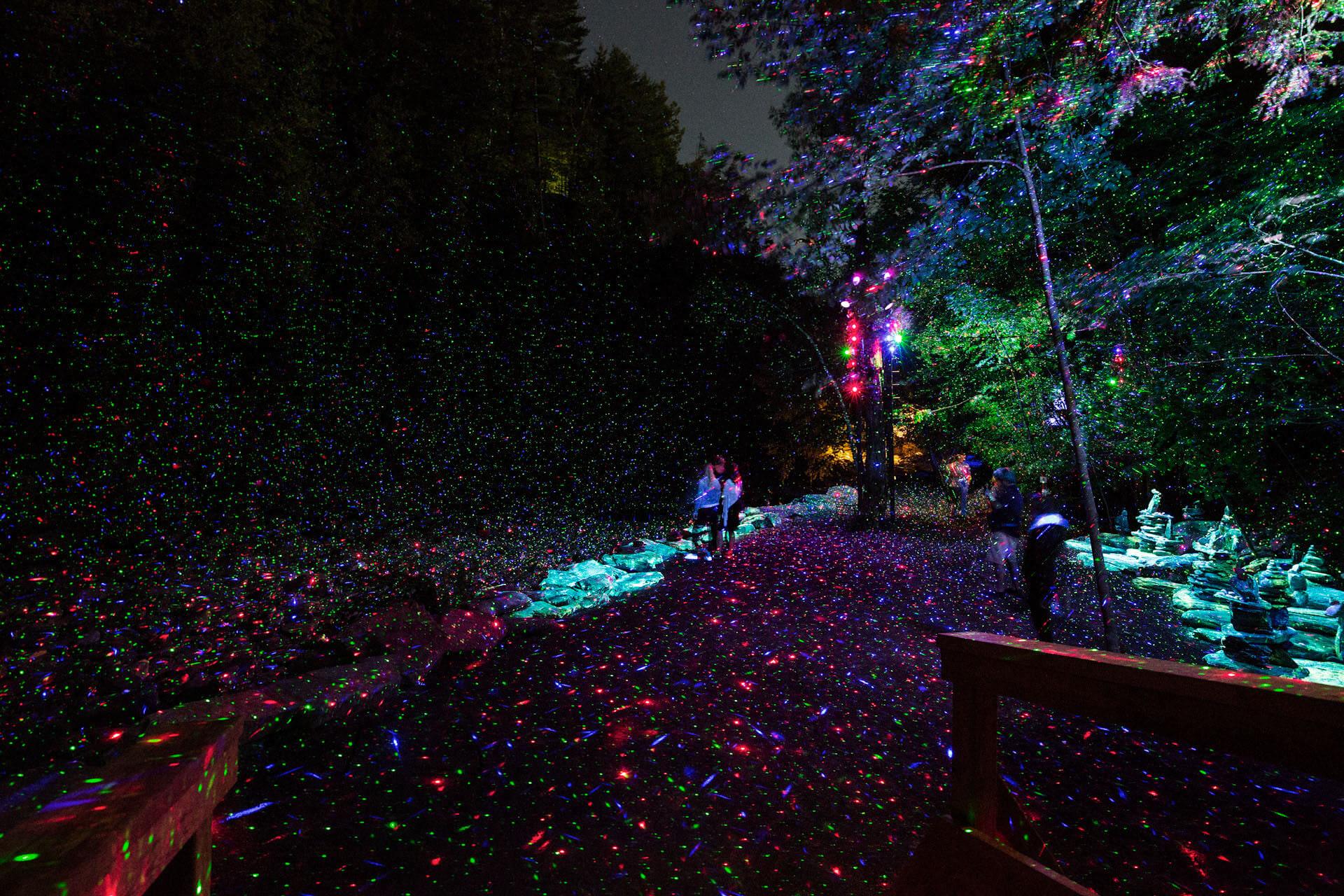 Résultats de recherche d'images pour «foresta lumina»
